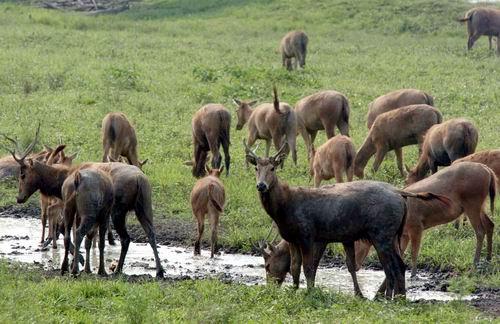 子麋鹿苑的麋鹿大家庭