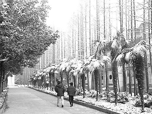 上海财经大学校园