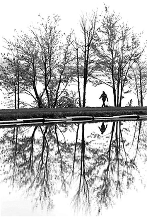 树木在水中的倒影如一幅风景画