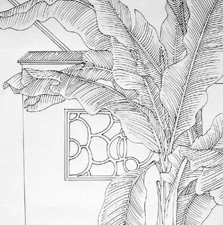 芭蕉手绘平面图