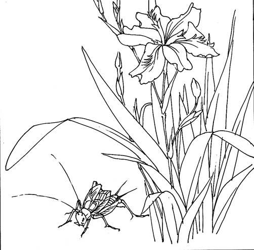 蟋蟀简笔画图片大全