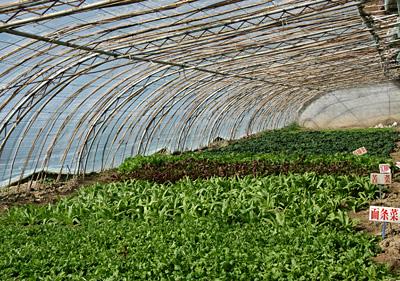 白朗县科技发展农业 成果丰硕
