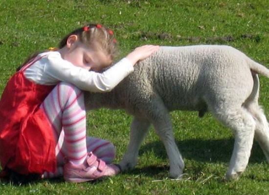 大自然中教小宝宝认识小动物