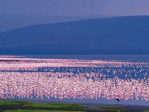 动物大迁徙 引发旅客赴肯尼亚旅行热